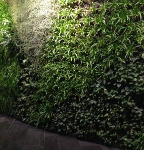 Plantevæg på hotellet