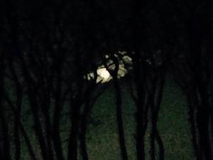 Månen der gemmer sig i mørket.