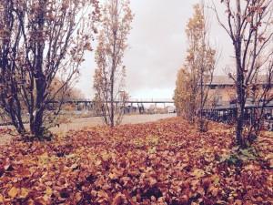 Smukt efterår i viborg