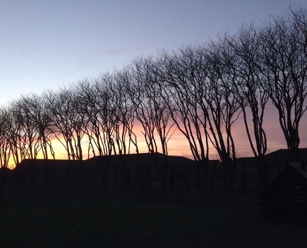 Elsker mine træer - kan I overhovedet se forskel på de forskellige billeder af træerne?